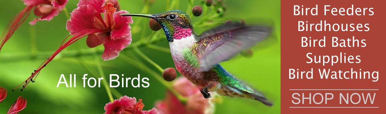 Everything Wild Bird! Bird Feeders, Bird Food, Bird Houses, Bird Baths, Bird Feeder/Bath/House Cleaners, Bird Books, Bird Watching, Optics, Cameras, Bird Calls, Deterrents and Guards and Wild Bird Related Themed Gifts.